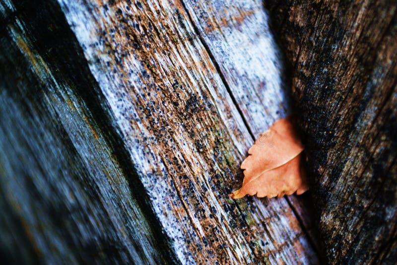 Φύλλο στα ξύλα στοκ φωτογραφία με δικαίωμα ελεύθερης χρήσης