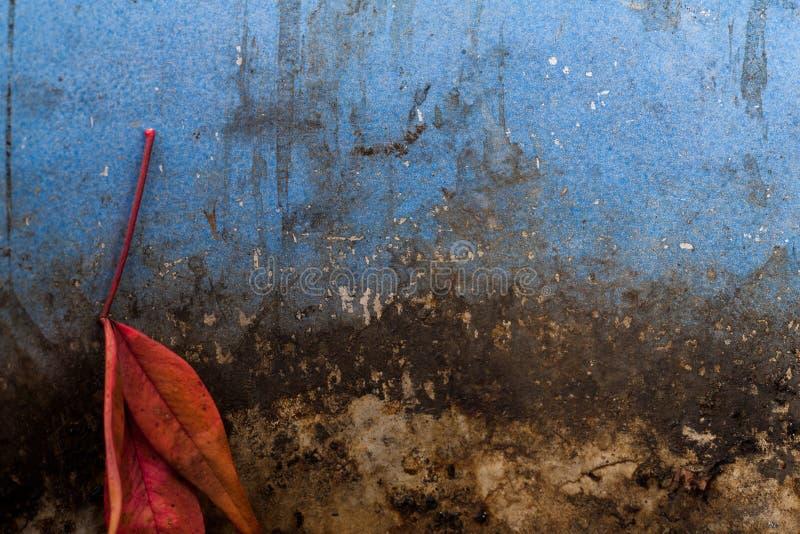 Φύλλο στο παλαιό δοχείο στοκ εικόνα με δικαίωμα ελεύθερης χρήσης