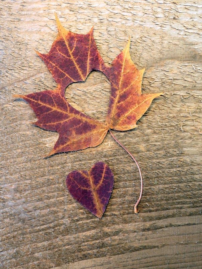 Φύλλο σφενδάμου και καρδιά στοκ φωτογραφία με δικαίωμα ελεύθερης χρήσης
