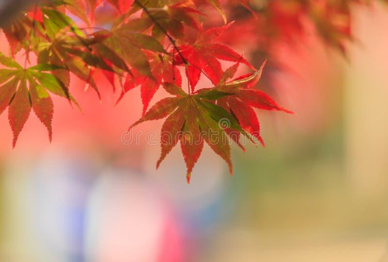 Φύλλο σφενδάμου το φθινόπωρο στοκ φωτογραφία με δικαίωμα ελεύθερης χρήσης