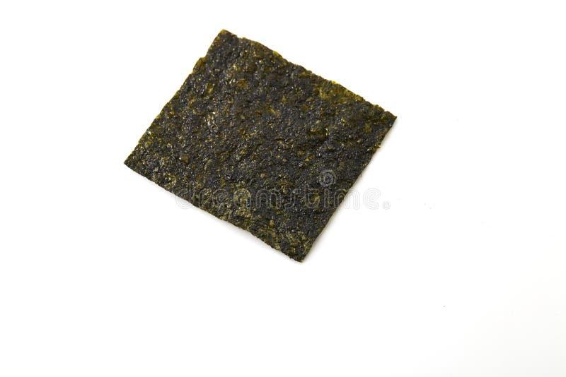Φύλλο του ξηρού φυκιού στοκ εικόνες