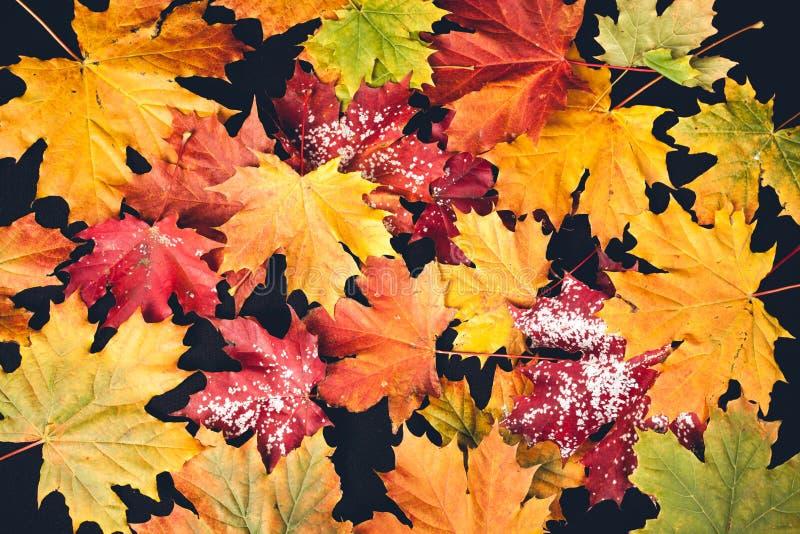 Φύλλο φθινοπώρου στη μαύρη ανασκόπηση στοκ φωτογραφίες