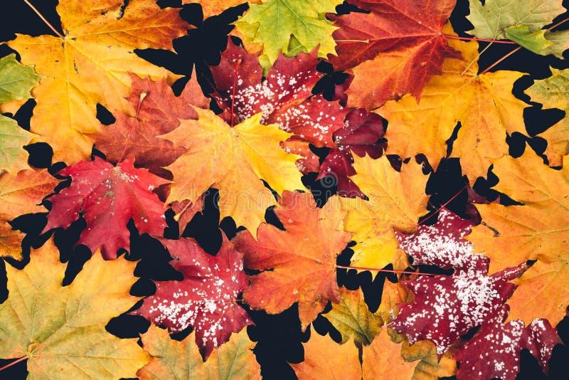 Φύλλο φθινοπώρου στη μαύρη ανασκόπηση στοκ φωτογραφία με δικαίωμα ελεύθερης χρήσης