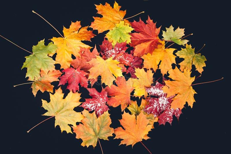 Φύλλο φθινοπώρου στη μαύρη ανασκόπηση στοκ εικόνα με δικαίωμα ελεύθερης χρήσης
