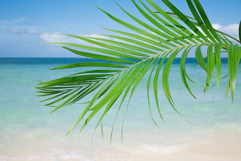 Φύλλο φοινικών, μπλε θάλασσα και τροπική άσπρη παραλία άμμου κάτω από τον ήλιο στοκ φωτογραφίες με δικαίωμα ελεύθερης χρήσης