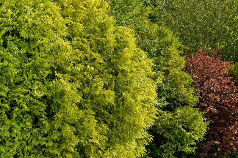 Φύλλωμα κήπων στοκ φωτογραφίες με δικαίωμα ελεύθερης χρήσης