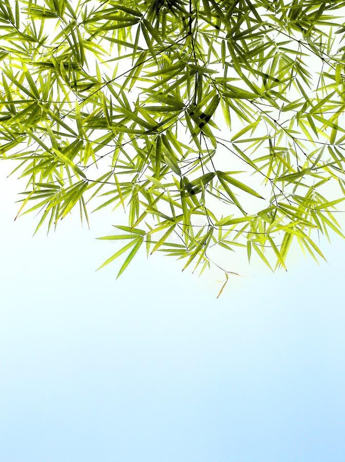 Φύλλωμα μπαμπού & φωτεινό υπόβαθρο μπλε ουρανού στοκ εικόνες