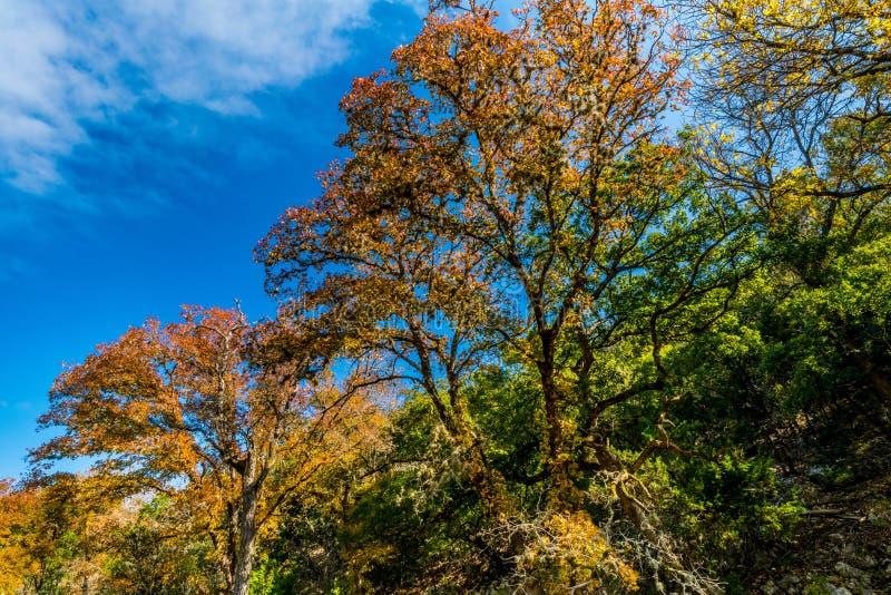 Φύλλωμα πτώσης στο χαμένο κρατικό πάρκο σφενδάμνων στο Τέξας στοκ φωτογραφία