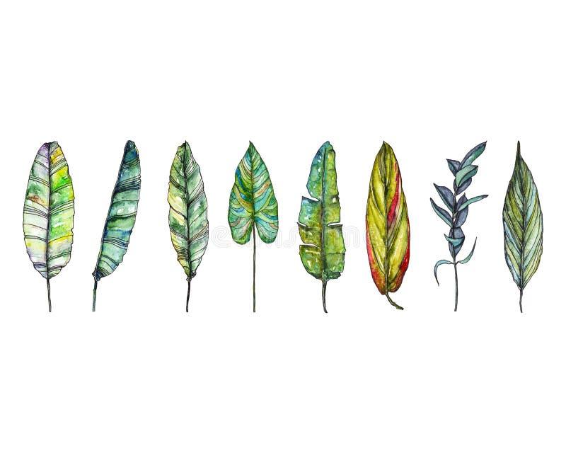 Φύλλωμα Watercolor απεικόνιση αποθεμάτων