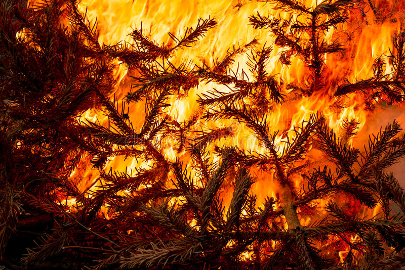 Φλεμένος κάψιμο χριστουγεννιάτικων δέντρων στοκ φωτογραφίες με δικαίωμα ελεύθερης χρήσης