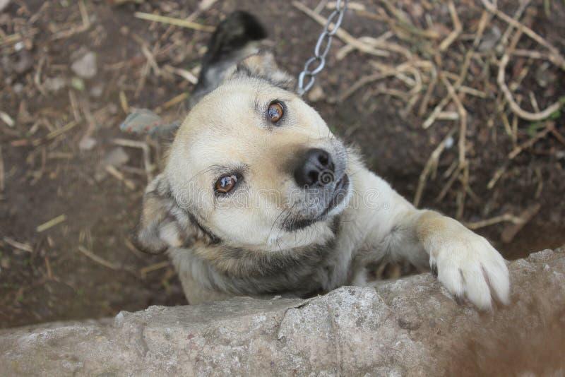 Φλερτ σκυλιών στοκ φωτογραφία
