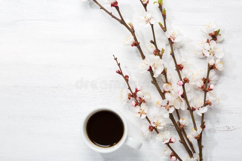 Φλιτζάνι του καφέ και κλάδοι του ανθίζοντας βερίκοκου στοκ εικόνα με δικαίωμα ελεύθερης χρήσης