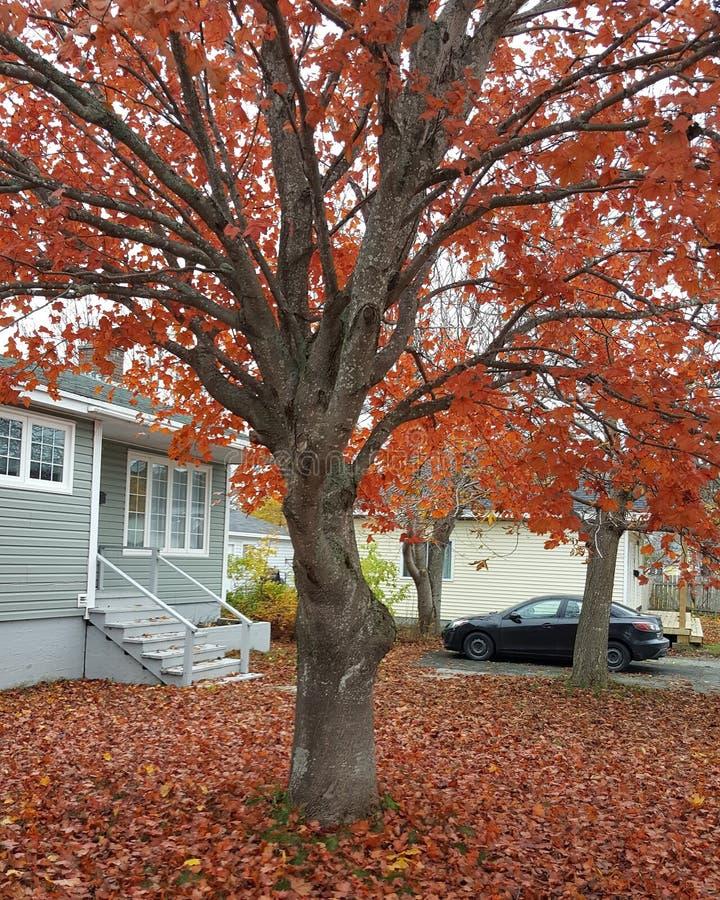 Φλογερό κόκκινο φθινόπωρο στοκ φωτογραφία με δικαίωμα ελεύθερης χρήσης