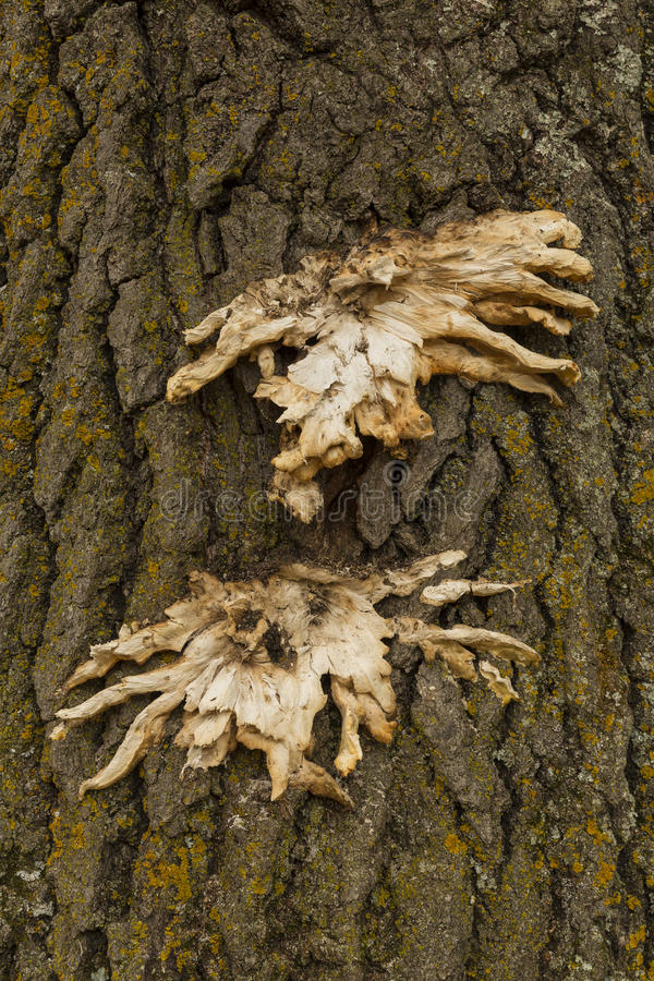Φλοιός & μανιτάρια δέντρων στοκ φωτογραφία με δικαίωμα ελεύθερης χρήσης