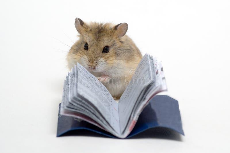 χάμστερ που διαβάζεται στοκ φωτογραφία με δικαίωμα ελεύθερης χρήσης