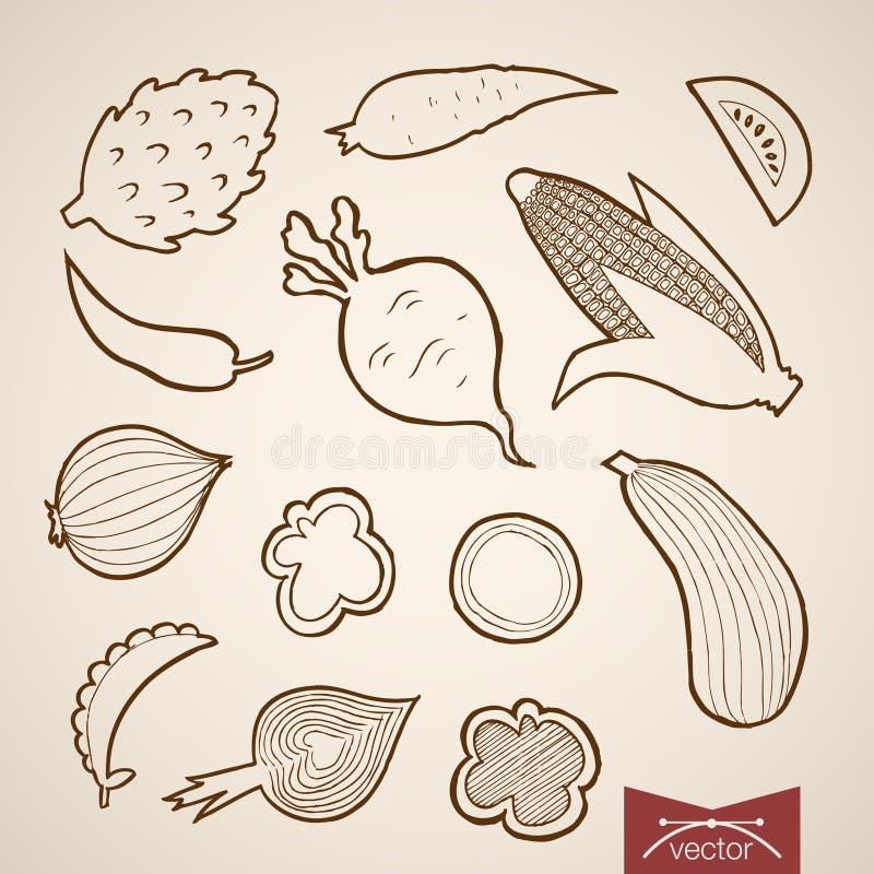 Χάραξη εκλεκτής ποιότητας συρμένο χέρι διανυσματικό φυτικό Penc απεικόνιση αποθεμάτων