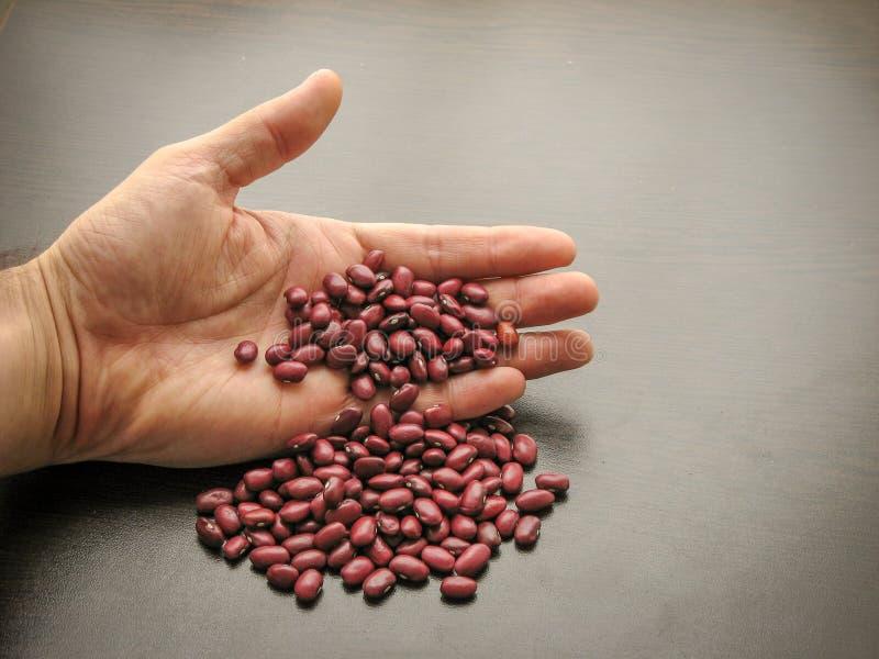 Χάστε επάνω των ξηρών κόκκινων σπόρων φασολιών υπό εξέταση στοκ εικόνα