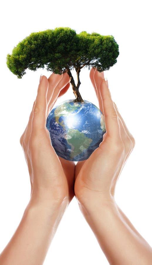 Χέρια, γη και το δέντρο διανυσματική απεικόνιση