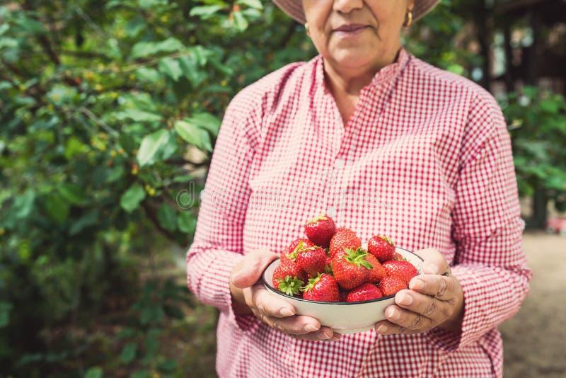 Χέρια γυναικών που κρατούν ένα κύπελλο των φραουλών στοκ φωτογραφία