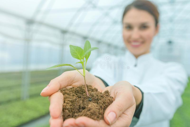 Χέρια γυναικών που κρατούν τις πράσινες εγκαταστάσεις στο χώμα ζωή έννοιας νέα στοκ εικόνες με δικαίωμα ελεύθερης χρήσης