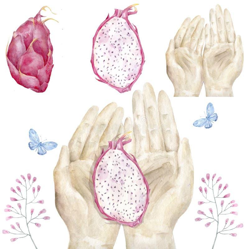 Χέρια και φωτεινή juicy τροπική τέχνη συνδετήρων watercolor φρούτων δράκων στο άσπρο υπόβαθρο διανυσματική απεικόνιση