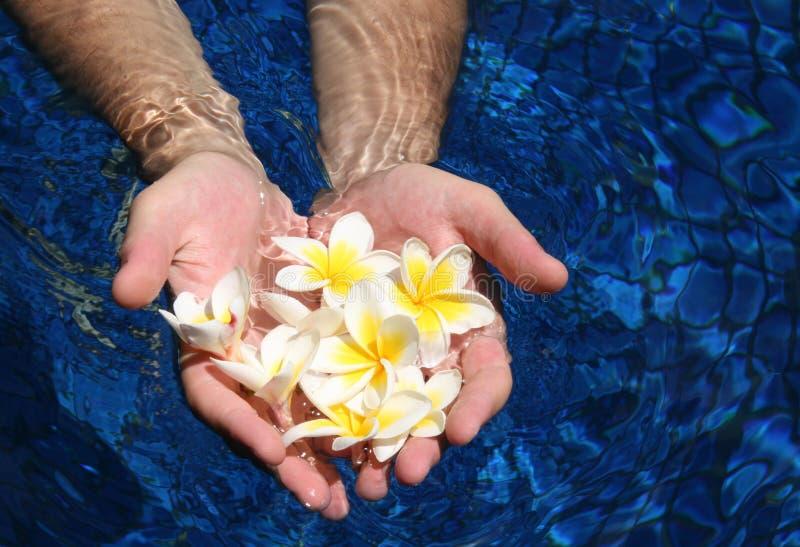 χέρια λουλουδιών στοκ φωτογραφίες