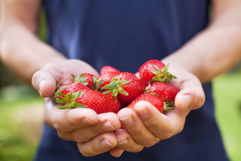 Χέρια με τη φρέσκια φράουλα στοκ εικόνα