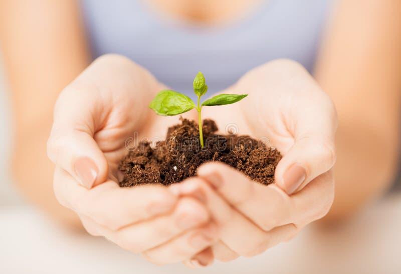 Χέρια με τον πράσινους νεαρό βλαστό και το έδαφος στοκ εικόνα με δικαίωμα ελεύθερης χρήσης