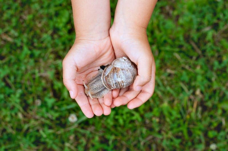 Χέρια παιδιών με το μεγάλο χαριτωμένο σαλιγκάρι στοκ εικόνα