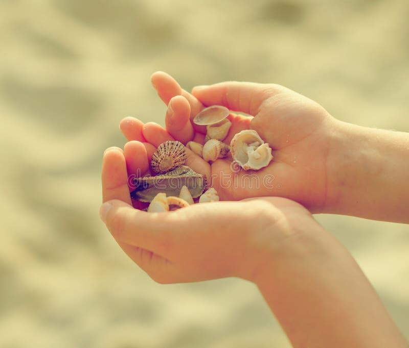 Χέρια παιδιών που κρατούν τα κοχύλια θάλασσας στοκ εικόνες με δικαίωμα ελεύθερης χρήσης