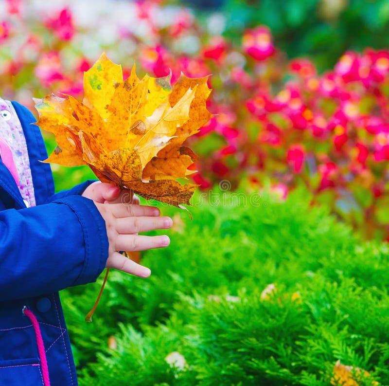 Χέρια παιδιών που κρατούν τα φύλλα φθινοπώρου στοκ εικόνες με δικαίωμα ελεύθερης χρήσης