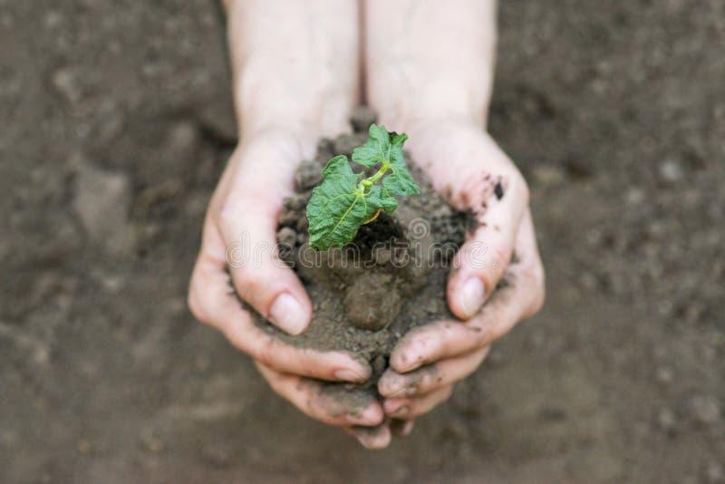 Χέρια που κρατούν τις νέες εγκαταστάσεις με το χώμα εικόνες οικολογίας έννοιας πολύ περισσότεροι το χαρτοφυλάκιό μου στοκ φωτογραφία με δικαίωμα ελεύθερης χρήσης