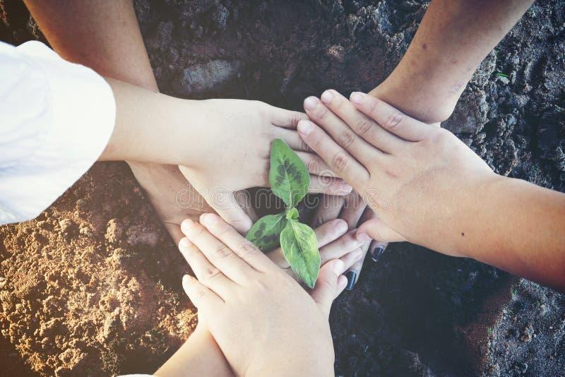 χέρια που κρατούν το μικρό δέντρο στοκ φωτογραφία με δικαίωμα ελεύθερης χρήσης