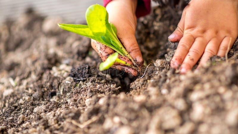 Χέρια που φυτεύουν έναν νέο πράσινο βλαστό στοκ εικόνες με δικαίωμα ελεύθερης χρήσης