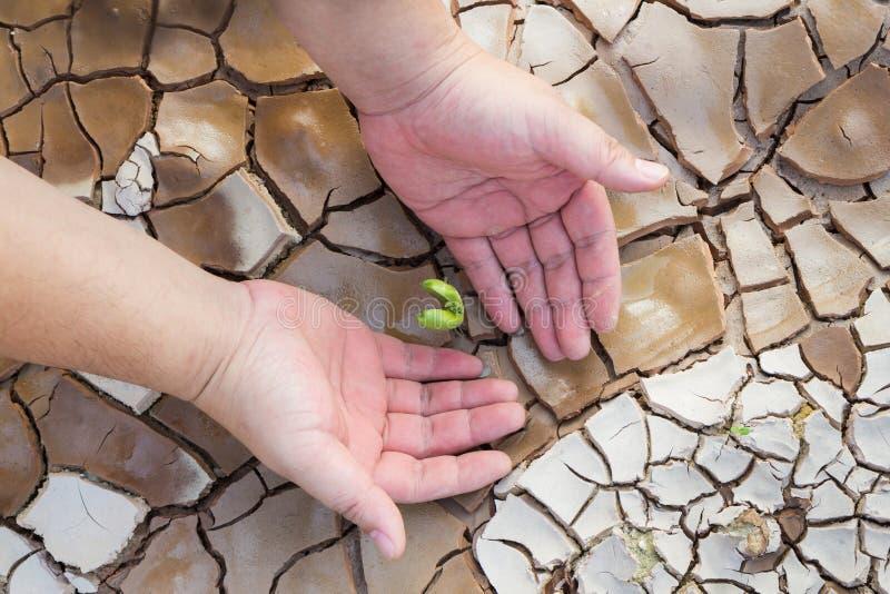 Χέρια της Farmer που προστατεύουν τη σπορά με το ραγισμένο έδαφος στοκ φωτογραφία με δικαίωμα ελεύθερης χρήσης