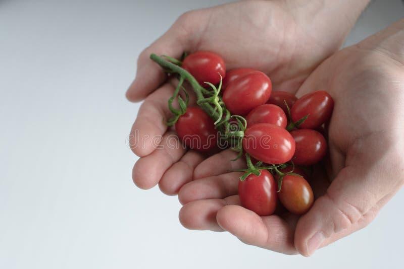Χέρια Man's που κρατούν τις ντομάτες κερασιών στοκ φωτογραφίες