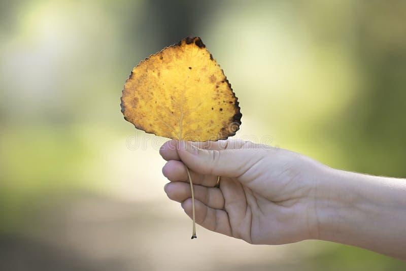 Χέρι γυναικών ` s που κρατά ένα κίτρινο και πορτοκαλί φύλλο στη δασική εποχιακή έννοια φθινοπώρου πτώσης και το κενό διάστημα αντ στοκ εικόνα