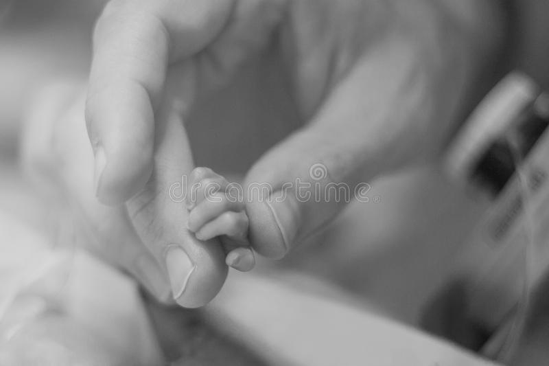 Χέρι εκμετάλλευσης πατέρων preemie στοκ εικόνες