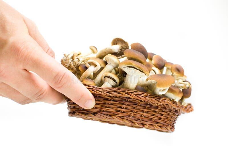 Χέρι μανιταριών στοκ εικόνα