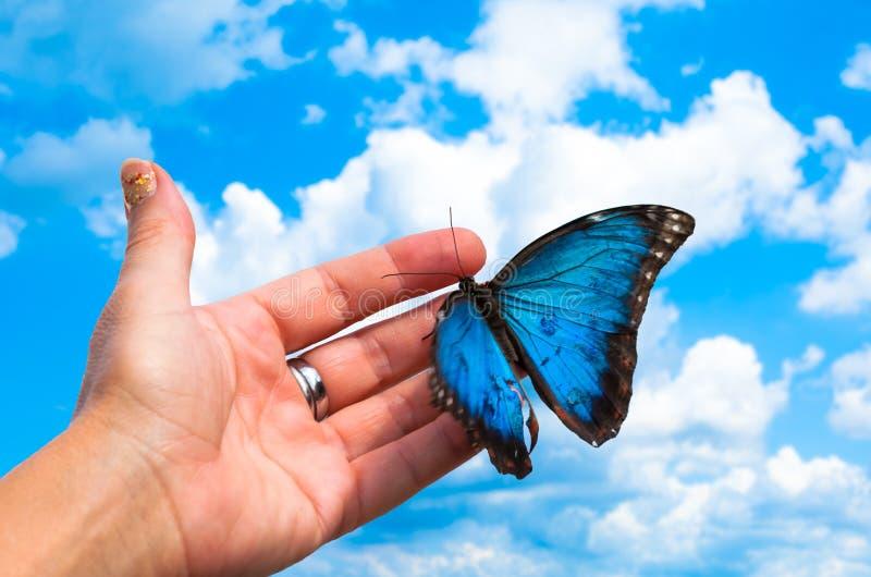 χέρι με την πεταλούδα στοκ εικόνες με δικαίωμα ελεύθερης χρήσης