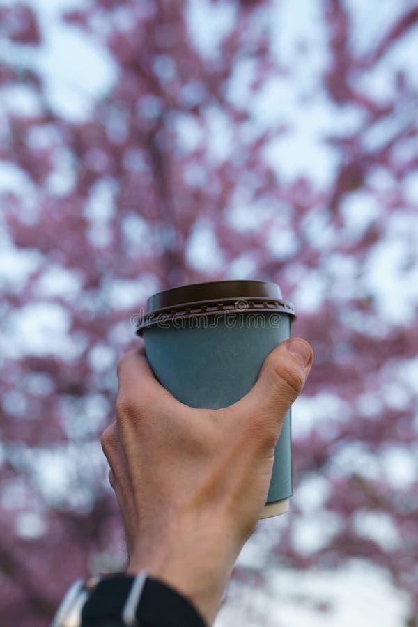 Χέρι με το φλιτζάνι του καφέ εγγράφου - ζωηρόχρωμο άνθος κερασιών sakura σε ένα πάρκο στη Ρήγα, ανατολικο-ευρωπαϊκή πρωτεύουσα στοκ φωτογραφίες