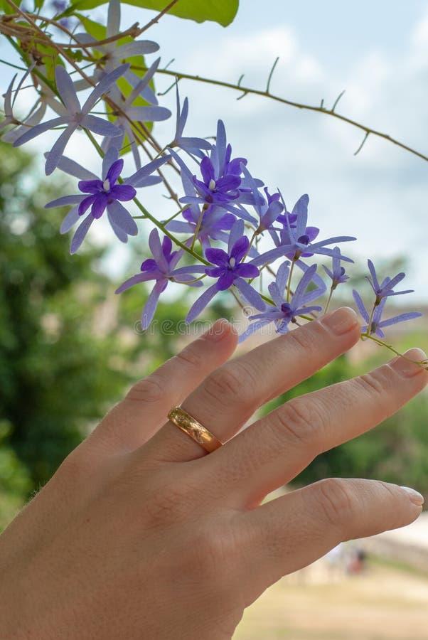 Χέρι μιας νέας παντρεμένης γυναίκας, το οποίο χαϊδεύει τα μικρά λουλούδια των εγκαταστάσεων Petrea στοκ φωτογραφίες με δικαίωμα ελεύθερης χρήσης