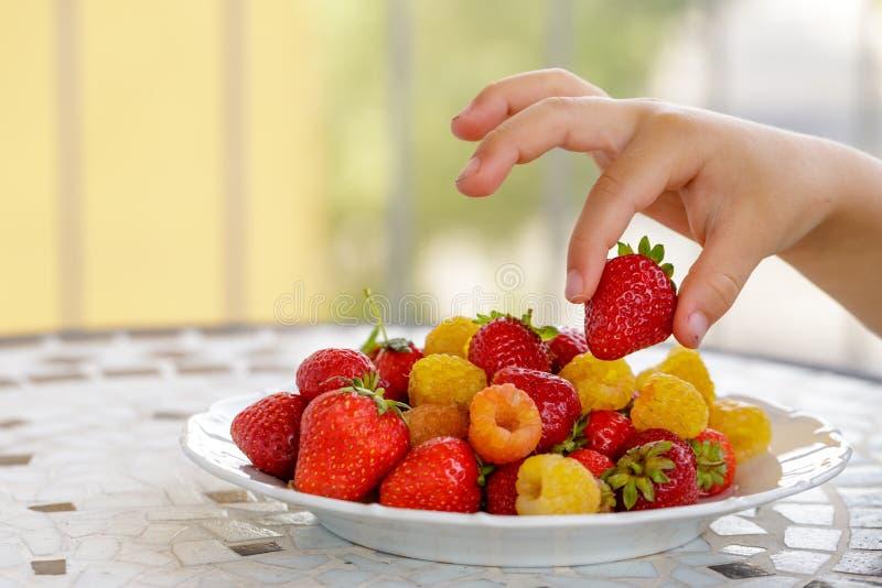 χέρι παιδιών που παίρνει τα βιο κίτρινα σμέουρα και τις κόκκινες φράουλες κλείστε επάνω στοκ φωτογραφίες με δικαίωμα ελεύθερης χρήσης