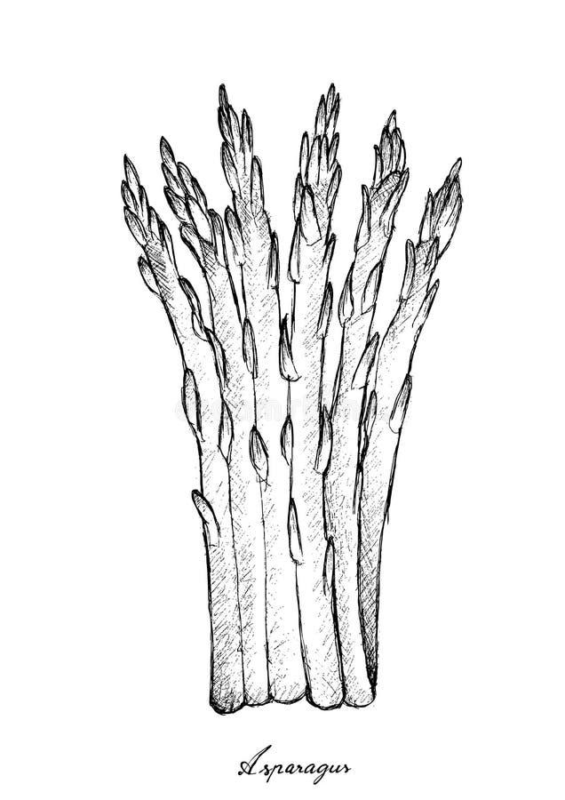 Χέρι που επισύρεται την προσοχή του φρέσκου πράσινου σπαραγγιού στο άσπρο υπόβαθρο διανυσματική απεικόνιση