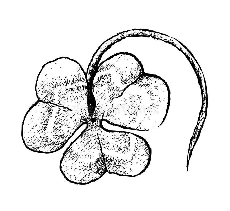 Χέρι που επισύρεται την προσοχή τριών τριφυλλιών φύλλων στο άσπρο υπόβαθρο διανυσματική απεικόνιση