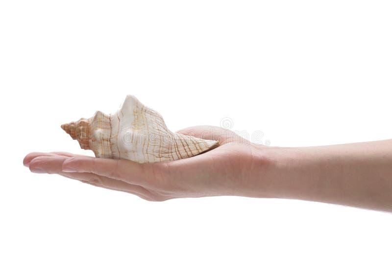 Χέρι που κρατά ένα κοχύλι στοκ εικόνες