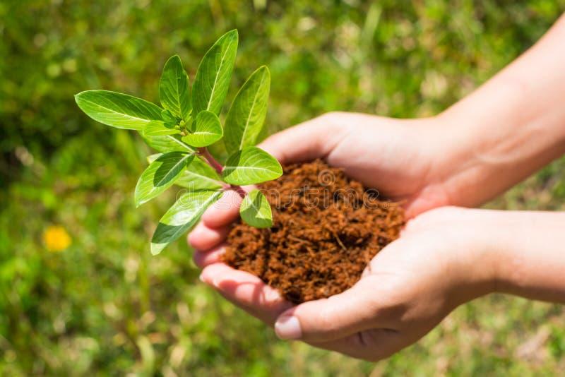 Χέρι που κρατά και που φυτεύει το νέο δέντρο στοκ εικόνα με δικαίωμα ελεύθερης χρήσης