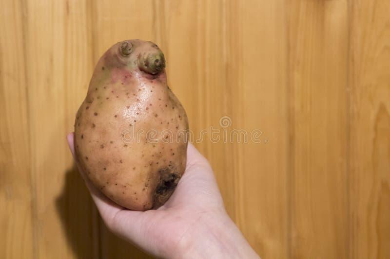 Χέρι που κρατά μια πατάτα υπό μορφή πατατών ως loxodontus ανθρωπακιών στοκ εικόνες με δικαίωμα ελεύθερης χρήσης