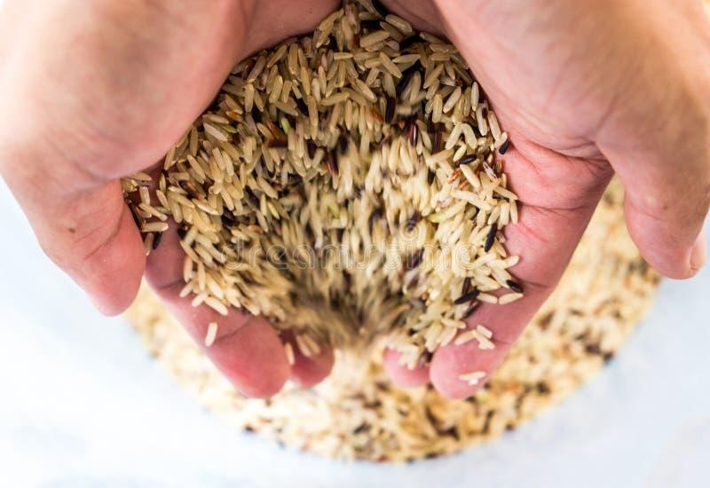 Χέρι που κρατά το ακατέργαστο καφετί ρύζι στοκ εικόνες