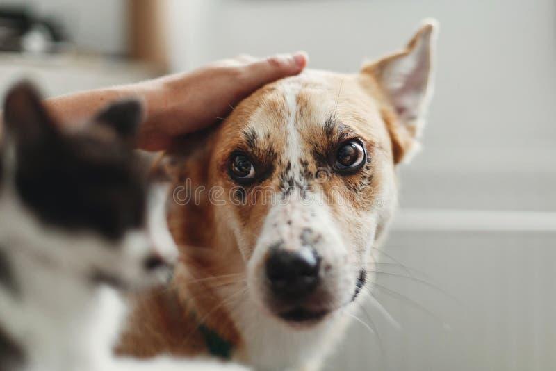 Χέρι που κτυπά το χαριτωμένο σκυλί και λίγο γατάκι στο μοντέρνο δωμάτιο γυναίκα χ στοκ φωτογραφία με δικαίωμα ελεύθερης χρήσης